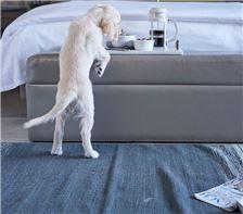 Senza Hotel - Double Queen Bed - Pet Friendly room