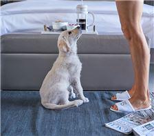 Double Queen Bed - Pet Friendly room
