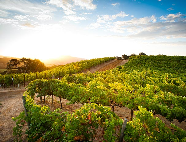 HALL Winery of Napa Valley