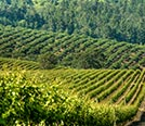 How many wineries are in Napa Valley?