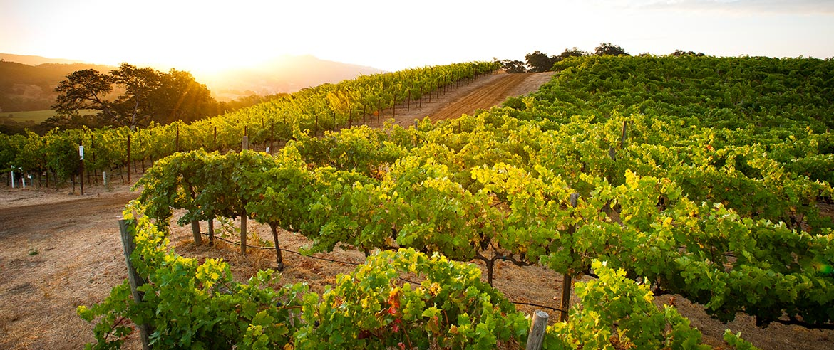 Napa valley Activities, California