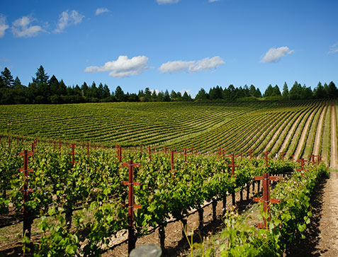 Napa Wine Tours to Local Vineyards