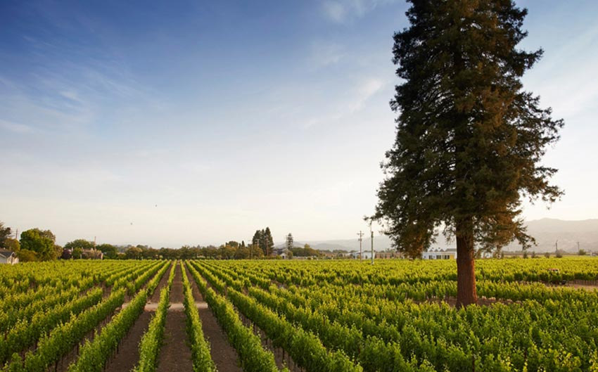 Senza Hotel is the Perfect location to explore the Napa Valley with ease